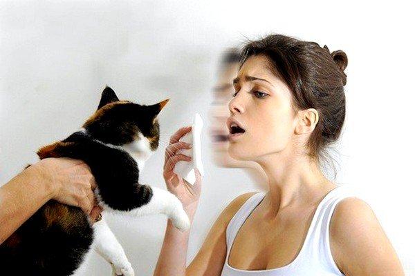 Аллергия на кошек - распространенный вид аллергии