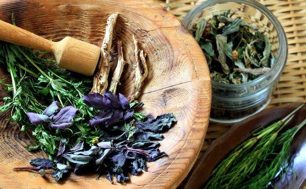 Лечение аллергии травами фото