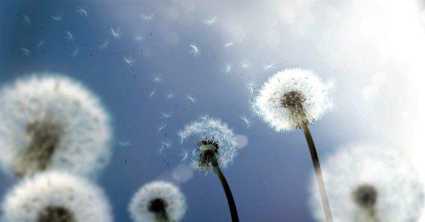 Пыльца цветков может быть одним из аллергенов