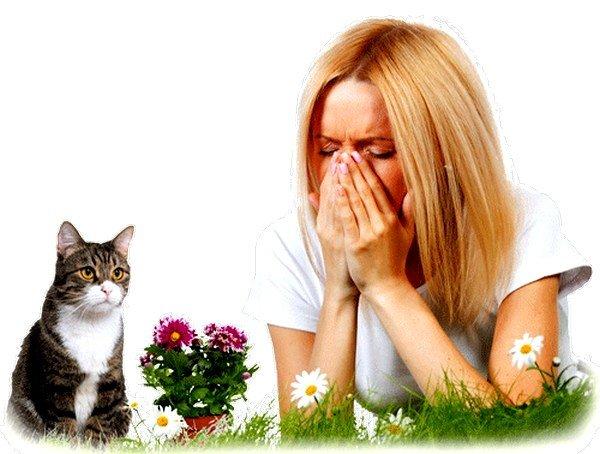 Чтобы достоверно выяснить, проходит ли аллергия на кошек, можно обратиться за помощью к психотерапевту