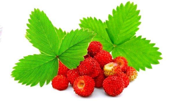 Заваренные листья земляники – это не только кладезь витаминов, но и прекрасное целебное отхаркивающее средство