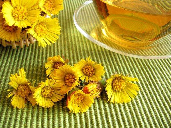 Цветы и листья мать-и-мачехи оказывают отхаркивающее, спазмолитическое, противовоспалительное и антисептическое действие