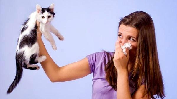 Шерсть животных может вызывать аллергию