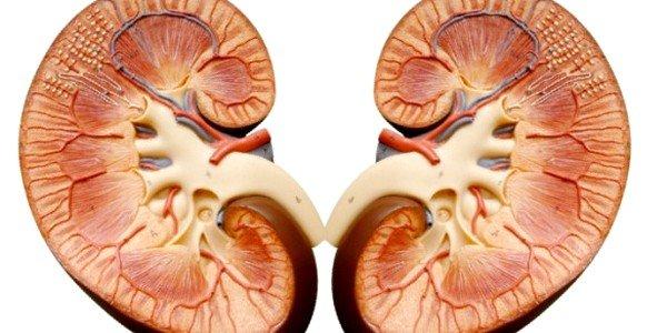 При заболеваниях почек необходимо учитывать замедленный вывод кодеина из организма