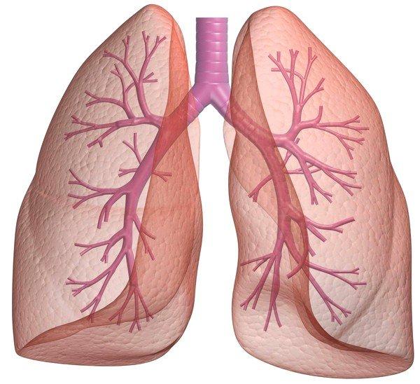 Бронхит – это заболевание, вызванное воспалением слизистой оболочки лёгких и/или бронхиального дерева