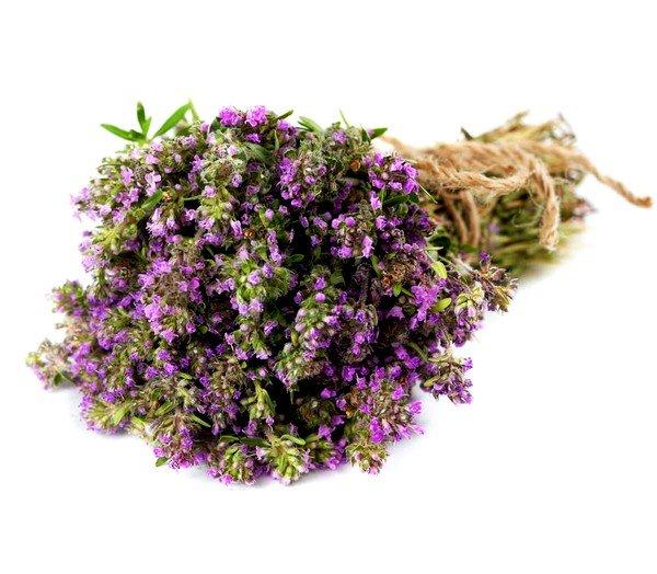 Чабрец - традиционно используемая трава при влажном кашле у взрослых