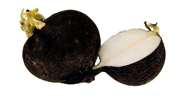 Эффективное средство от смолы, осевшей в легких, – чёрная редька