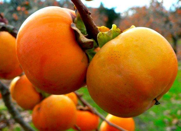 Лучшим народным средством при кашле считаются фрукты богатые содержанием витамина С: хурма, клюква, смородина, рябина