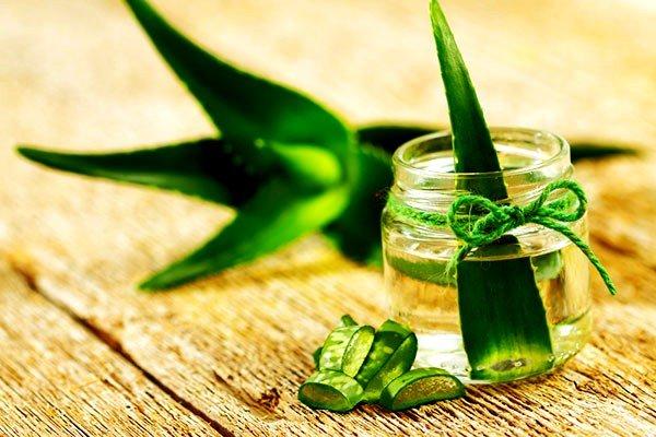 Срезанные листья рекомендуется положить в чистую сухую банку и оставить в прохладном месте на несколько дней, накрыв марлей
