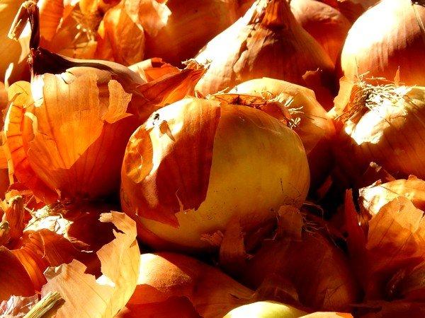 Луковые отвары хорошо помогают справиться с симптомами бронхита и затянувшегося кашля