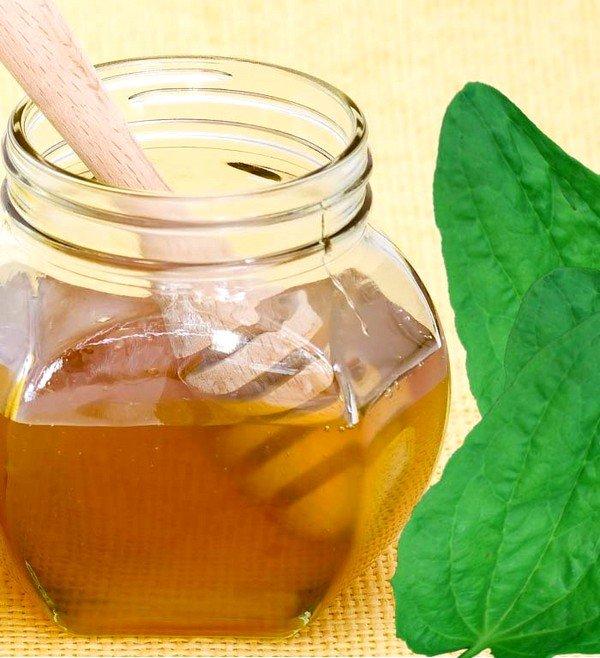 Лекарство на основе меда и сока подорожника широко применяется при заболеваниях дыхательных путей