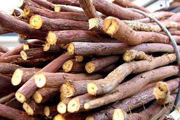 Сушить можно только крупные корни, не имеющие механических повреждений
