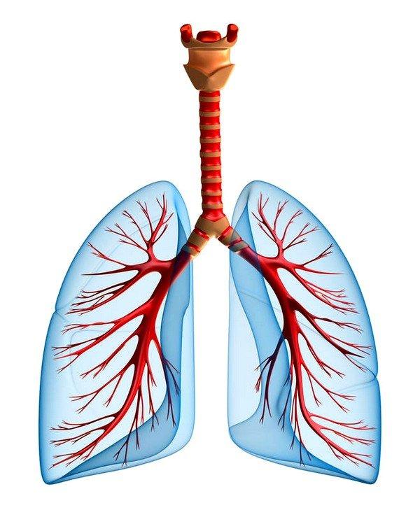После того как болезнетворные микроорганизмы проникают в организм ребенка, они начинают поражать дыхательные пути