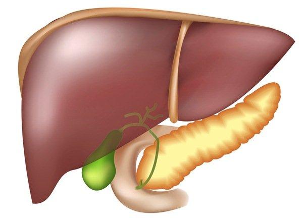 При обострении заболеваний желчевыводящих путей барсучий жир противопоказан