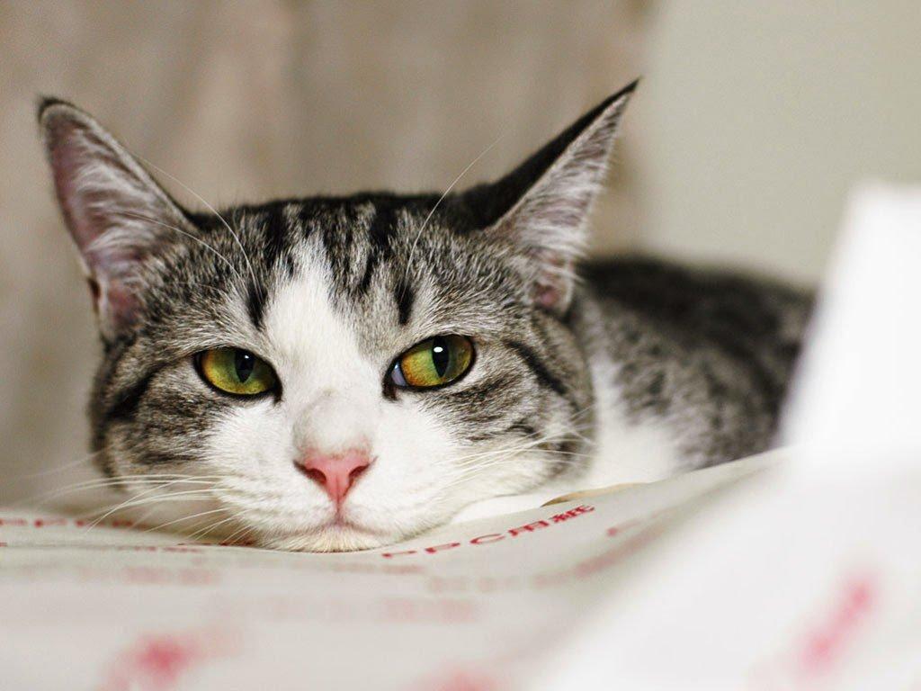 Если с ребенком рядом живет домашнее животное, то горло будет раздражаться от такого соседства, потому что туда попадают волоски и пух