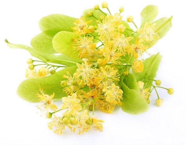 При более серьезных болезнях, вызывающих кашель, поможет рецепт с березовыми почками и цветами липы