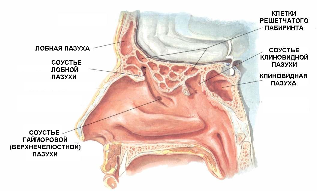 Схема гайморита