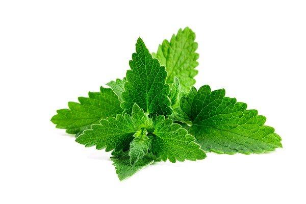 Мята тоже используется при лечении, но при отсутствии аллергии на растение
