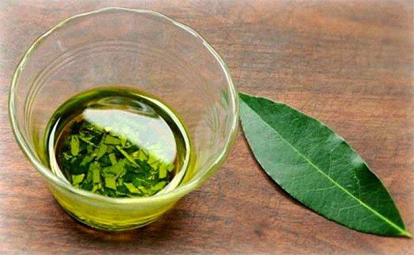 Очень эффективное средство лечения кашля в домашних условиях – это отвар из лавровых листьев