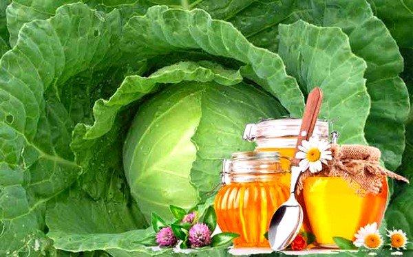 Помогает ли при простуде капустный лист с медом от кашля фото