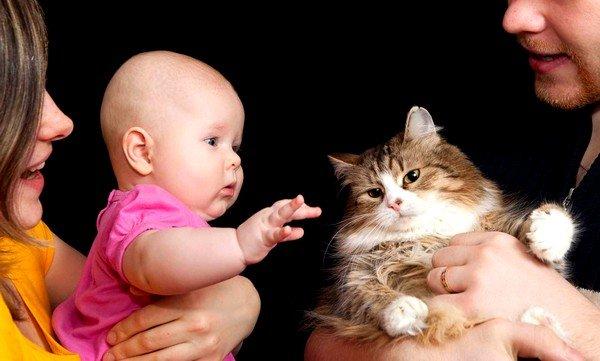 Контакт с домашними животными может быть причиной аллергии у детей