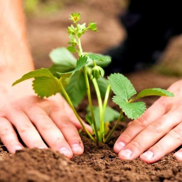 Заражение может произойти в результате регулярного контактирования человека с почвой