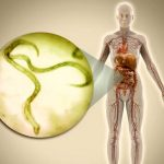 Карликовый цепень ‒ гельминт, паразитирующий в кишечнике человека и некоторых мелких грызунов.