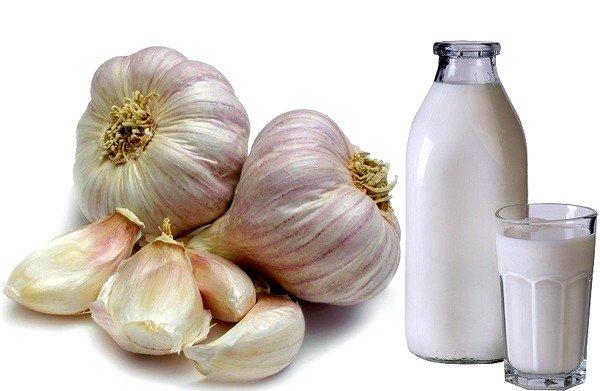 Чеснок с  молоком эффективен при гельминтозах