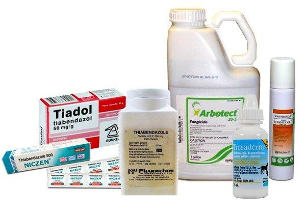 Альбендазол и тиабендазол показывают хороший результат при лечении глазного и висцеpального токсокаpоза