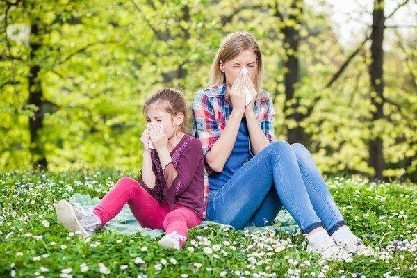Причины и симптомы аллергии на амброзию фото