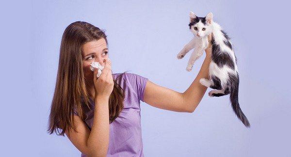 Как лечить аллергию на шерсть животных фото